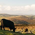 The view from Haytor Rocks (2) by redown