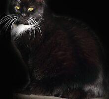 Tuxedo Cat by simpsonvisuals
