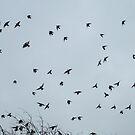 sparrow circles by Hannah Clair Phillips