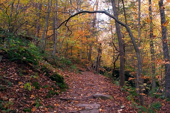 Lovin' The Leaves On The Lower Falls Trail (as-is) by Gene Walls