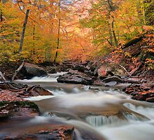 Glowing Fall Foliage Over Kitchen Creek by Gene Walls