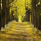 Yellow Path by Martins Blumbergs