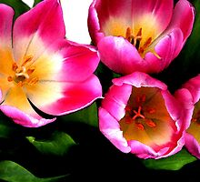 Bunch of pink tulips by Bobbie Sansom
