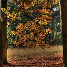 Autumn Colors by Nicole W.