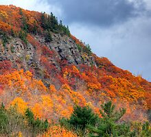 HDR Waterford Bluff Leaves Autumn by Jamie Roach