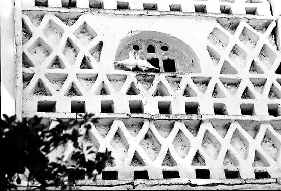 1988 - the pigeon house by moyo