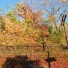 October Sixth Street Embankment Autumn Colors, Abandoned Pennsylvania Railroad Embankment, Jersey City, New Jersey by lenspiro