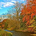 The River Derwent by David  Parkin