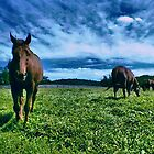 Horses of Sagamore by Robert Zunikoff