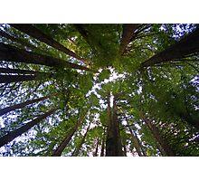 How The Trees Sleep Photographic Print