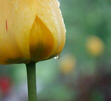 Weathered tulip - Trondheim by Silje Schanche