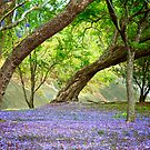 Jacaranda Grove by Renee Hubbard Fine Art Photography