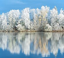 White Frost by Ari Salmela