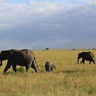 Elephants by Amy Wilson