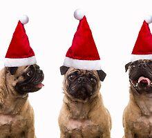 Christmas Pugs Trio by Edward Fielding