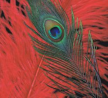 Red Hot Peacock by Jessica Manelis