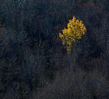 Tree Autumn Yellow by Jamie Roach