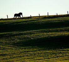 Horse Field Sun by Jamie Roach
