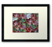 Frosted leaves Framed Print