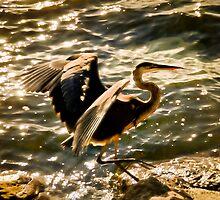 Blue Heron by LudaNayvelt