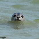 seal looking out by Steve Shand