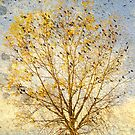 The Bird Tree by BelleFlores