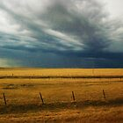 North Dakota Field of Dreams  by ChelcieSPorter