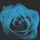 blue rose by Chelsea P