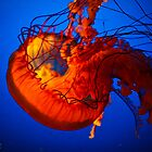 Jelly Fish by amieanderson