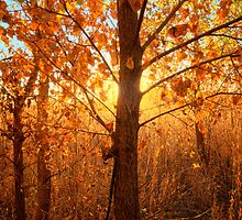 Autumn Lights by Bob Larson