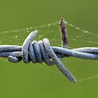 Barbed Wire by KateJasmine