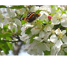 Once upon a Butterfly Photographic Print