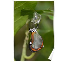 How Glasswings are made.............. Poster