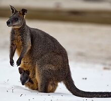 Beach Visitor - Green Patch Beach, NSW by Malcolm Katon