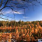 """  Tamarack Pond  "" by fortner"