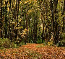 Path Through the Autumn Woods by Don Schwartz