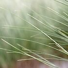 Beach grass abstract 3 by Phillip Shannon