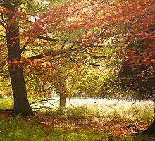 Wonderful Autumn Colours by CJTill