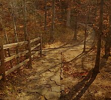Walkway Through the Forest by Sandy Keeton