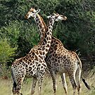 JUST NECKING by Raoul Madden
