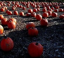 Pumpkin Patch by Amanda Vontobel Photography