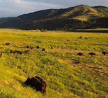 Buffalo Pasture by Rob Atkinson