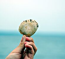 Seashell by MeghanRoberts