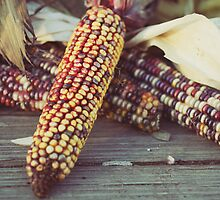 harvest by beverlylefevre