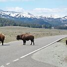Three Bison by AnnDixon
