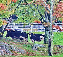 Cows In Autumn by Deborah  Benoit