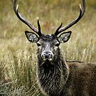 Monarch of the Glen 2 by James Stevens