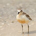 New Zealand Dotterel by Robyn Carter