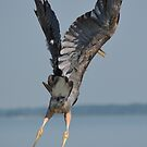 Heron Hands Up by BeachBumPics
