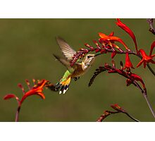 PRETTY AMONG FLOWERS Photographic Print